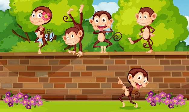 レンガの壁で遊ぶグループサル