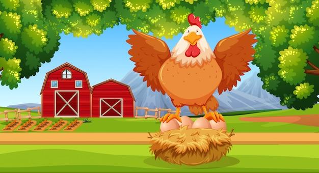 農地での雌鶏