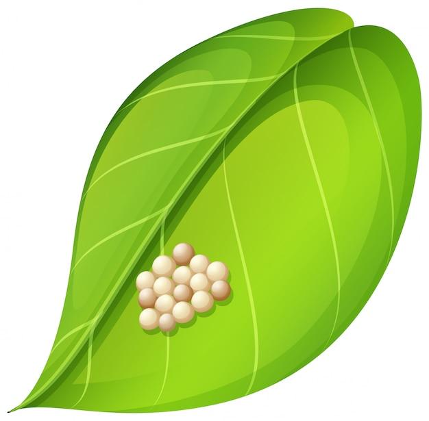 葉の蛾の卵