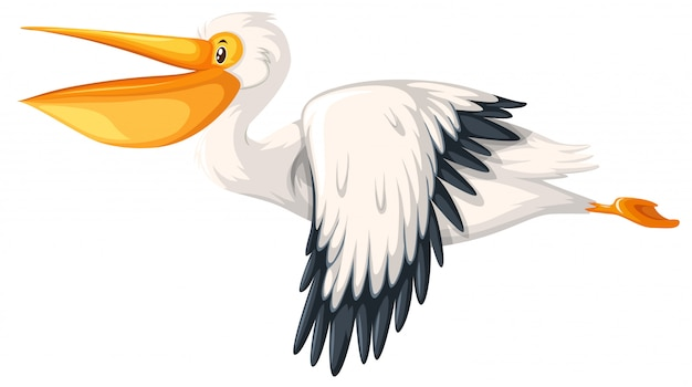 白い背景に飛んでいるペリカン