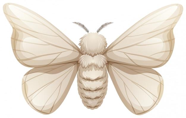 Шелковый червь на белом фоне