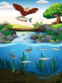 川の魚を捕まえるイーグル