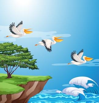 空に飛ぶペリカン