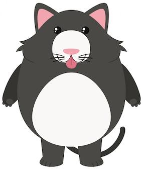 白い背景に灰色の猫
