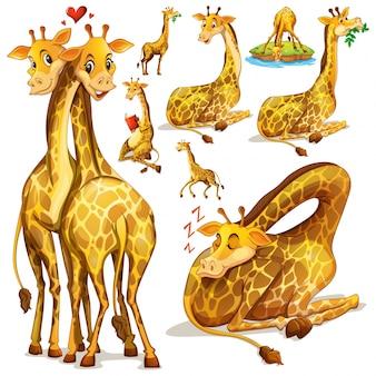 Жирафы в разных положениях иллюстрации
