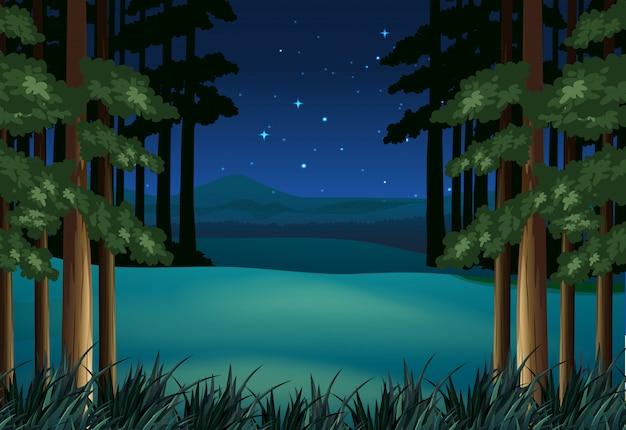 星の夜の森の風景