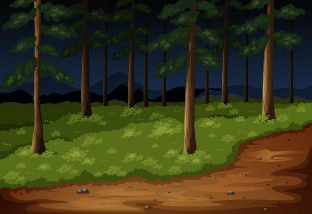 夜の木々とトレイルのある森の風景