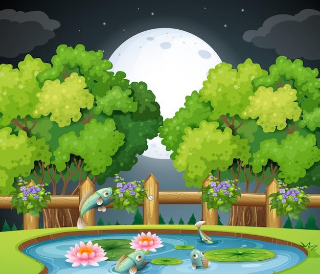 夜の池の魚