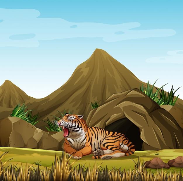 洞窟の前に野生の虎