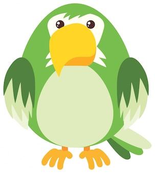 Зеленый попугай на белом фоне