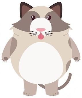 Толстый кот на белом фоне