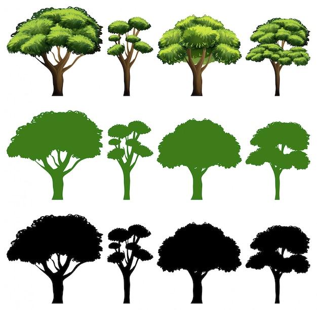 木の異なるデザインのセット