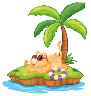 Кот на летнем острове