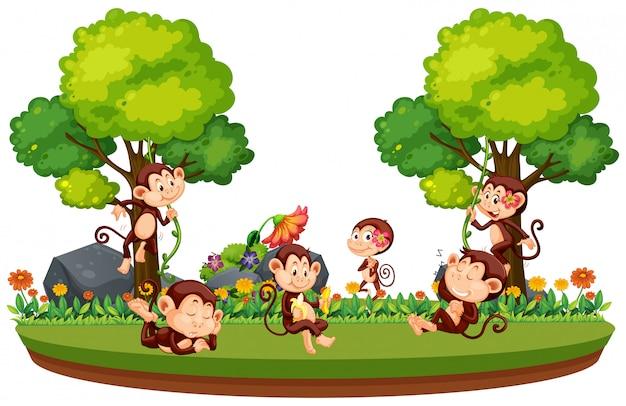 Дикая обезьяна в лесу