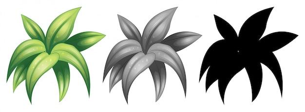 孤立した植物のセット