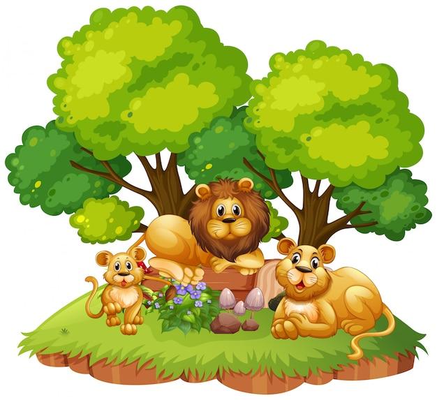 孤立した自然にライオンの家族
