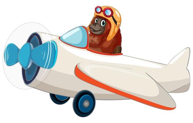 飛行機に乗ってオランウータン