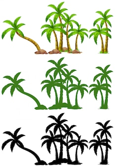 Набор из пальмы
