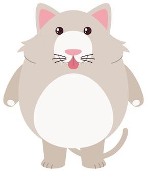 Серый кот с глупым лицом