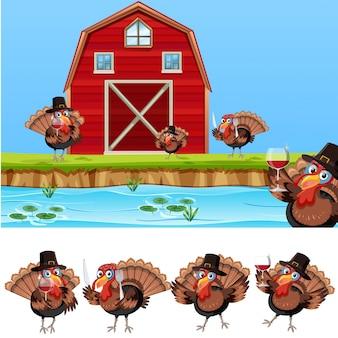 農地で感謝祭の七面鳥