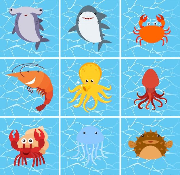 海の生き物キャラクターのセット