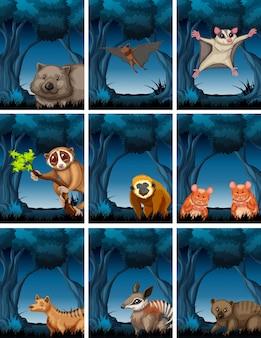 森の中のエキゾチックな動物