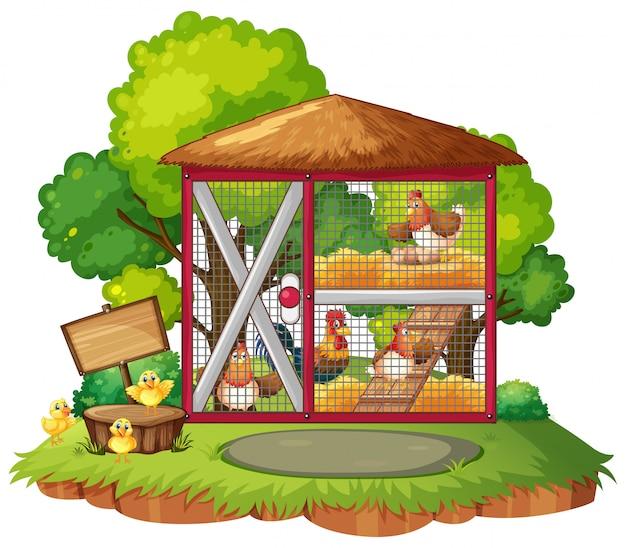小屋で多くの鶏