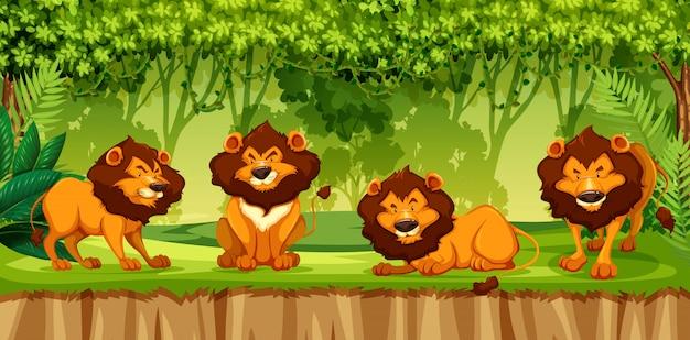 ジャングルの中でライオンのグループ