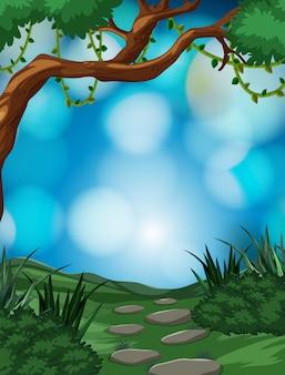 熱帯雨林の背景