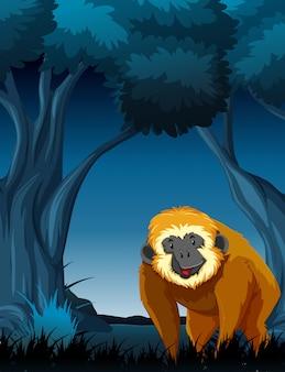 夜の森の猿
