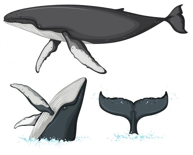 白い背景の上のザトウクジラの文字