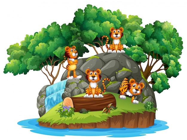 孤立した自然の中で虎