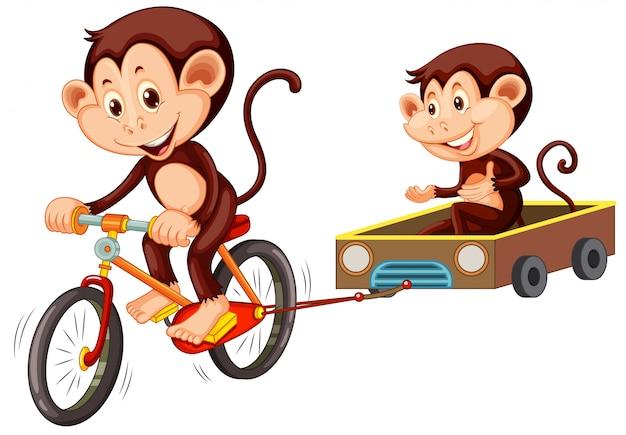 白い背景の上の猿乗馬自転車