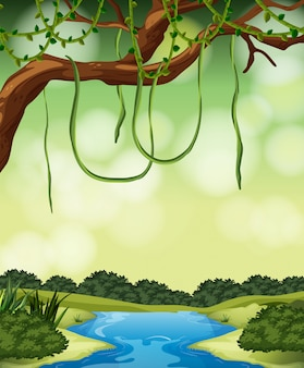 自然のジャングルの風景