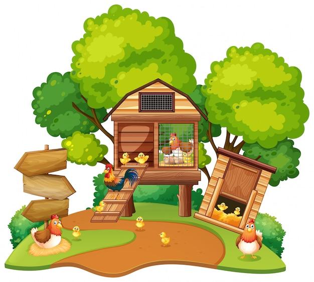 鶏は鶏小屋に住んでいる