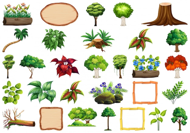 観賞用植物のセット