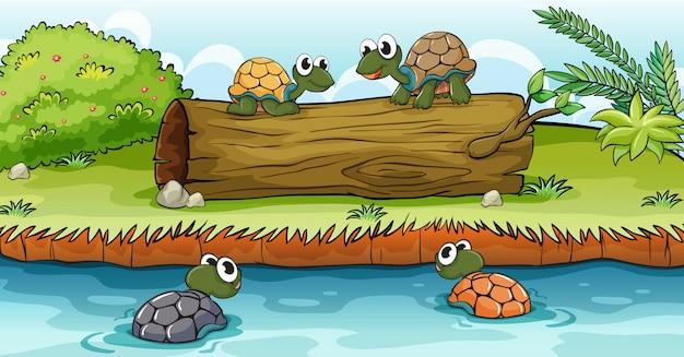 Черепахи на воде и бревно