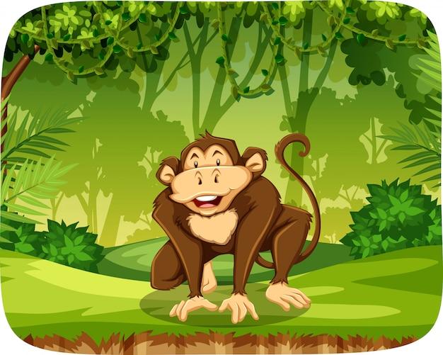 Обезьяна в джунглях