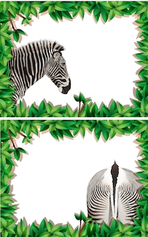 Набор зебры на природе кадр