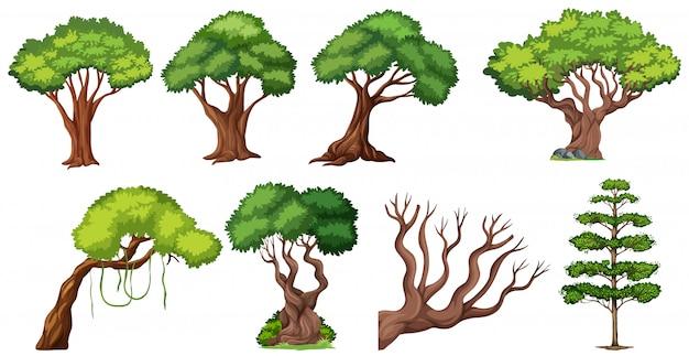 Набор разного дерева
