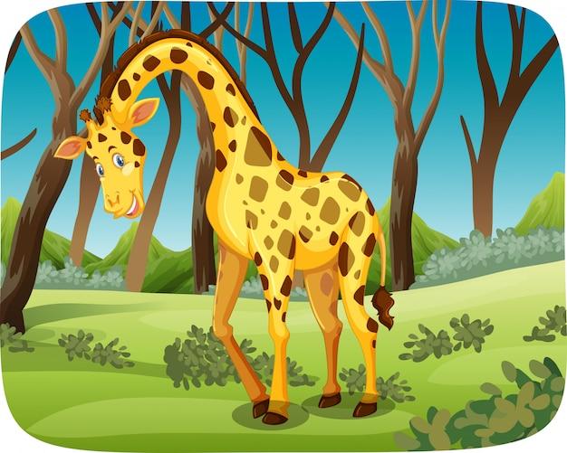 Жираф в лесу