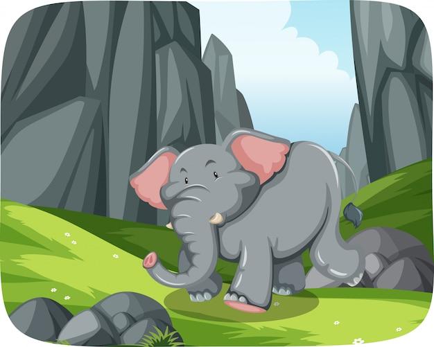 Слон бежит в природе