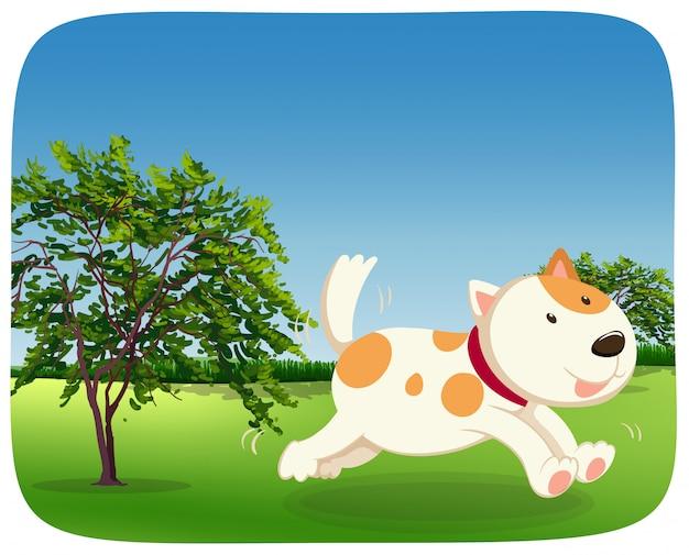 Собака бегает в парке