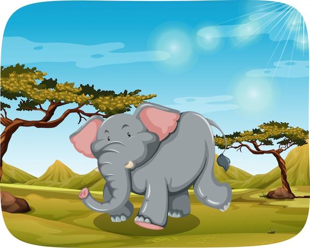 Слон в африканской сцене
