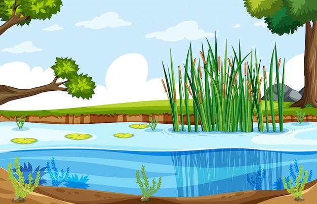 自然湿地の風景
