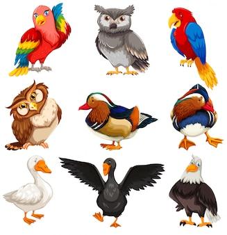 多様な鳥の立っているセット