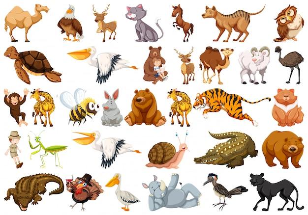 野生動物のセット