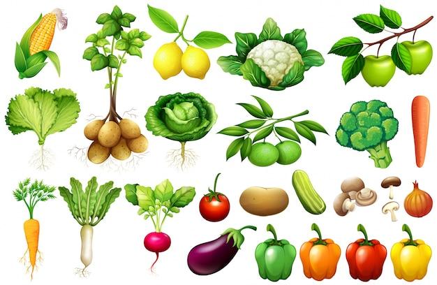 Иллюстрация различных видов овощей