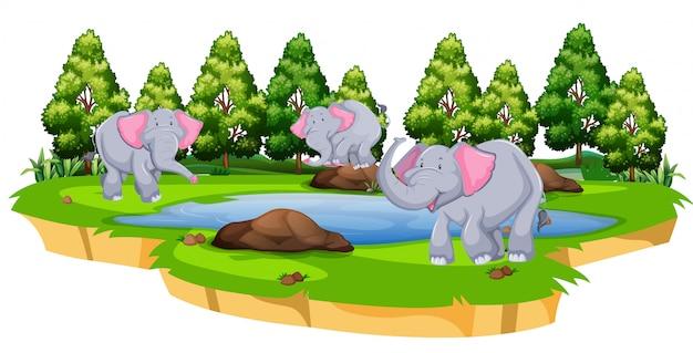 自然の中で象のグループ