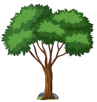 孤立した木